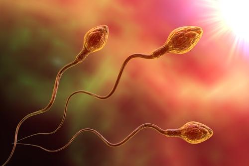 精液検査 男性不妊 精子